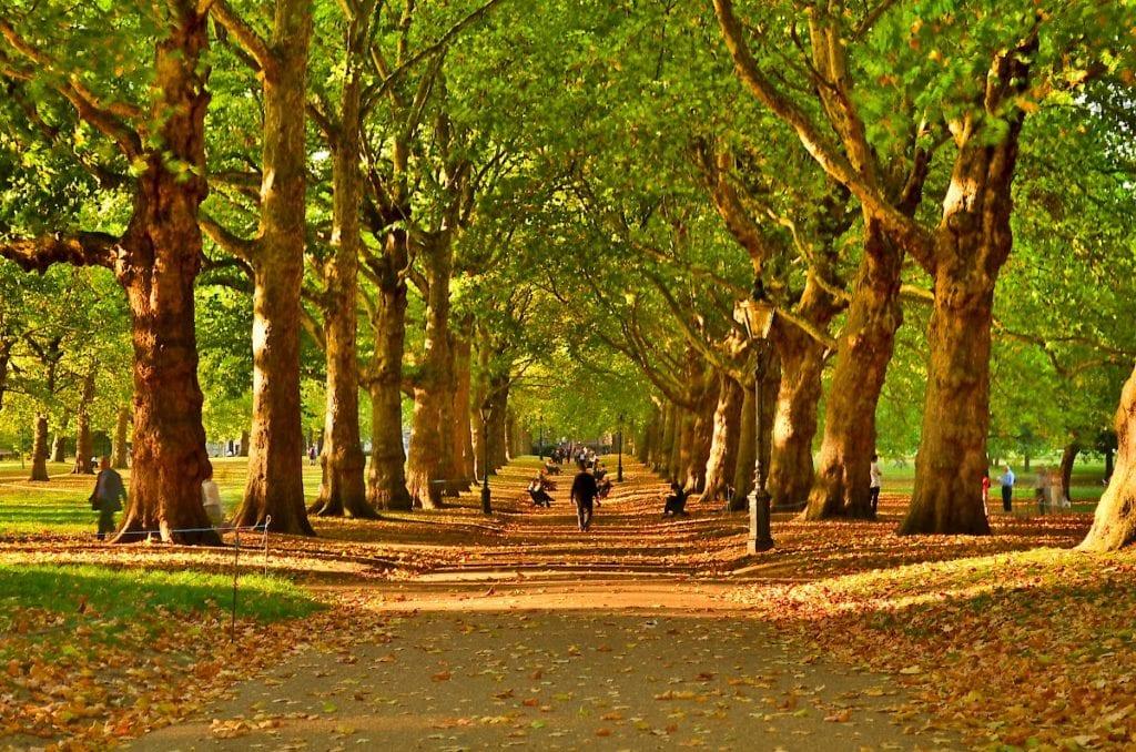 green park london VIVA